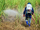 China MoARA Detected 511 Non-conforming Pesticides in 2018